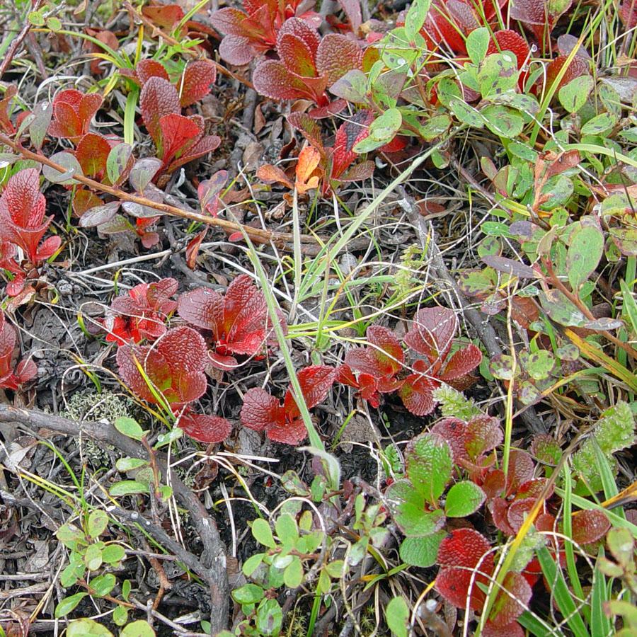 Eden By The Bay Denali National Park