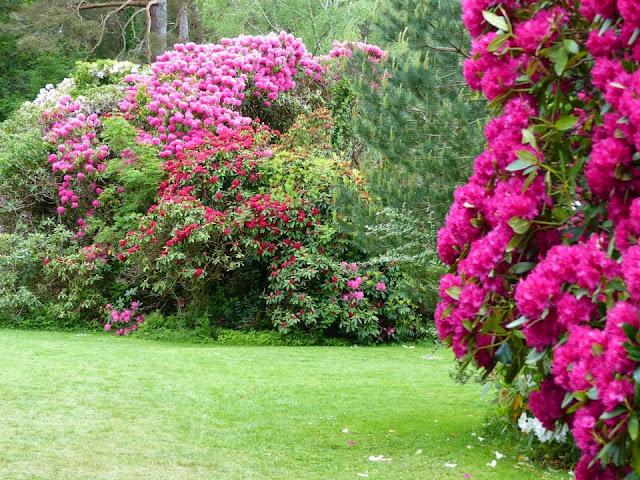 visite parc national de Killarney Irlande