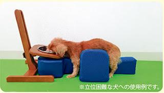 alimentação elevada de cães paralisados