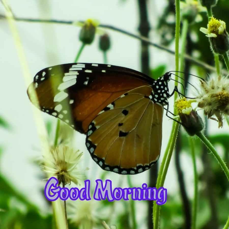 good morning natural images