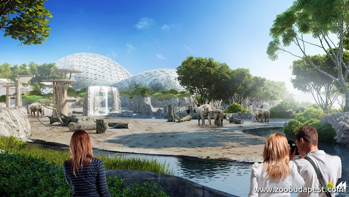 Két év múlva nyílhat meg az Állatkert új bemutató komplexuma