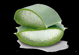 Aloe vera Blattstück
