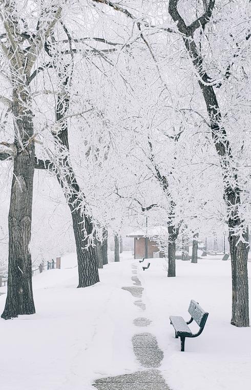 Winter Medicine Hat Alberta Hoarfrost