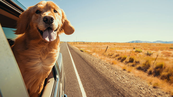 traveling-to-europe-with-a-dog