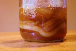 How to Brew Kombucha SCOBY mother organic DIY