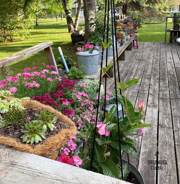 Photo of summer flowers on the deck
