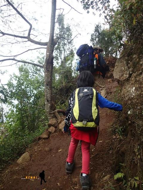 mendaki gunung prau, camping di gunung prau bersama anak
