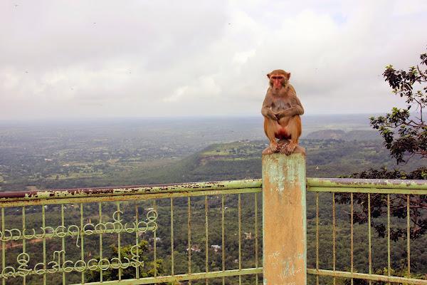 Mono en el Monte Popa