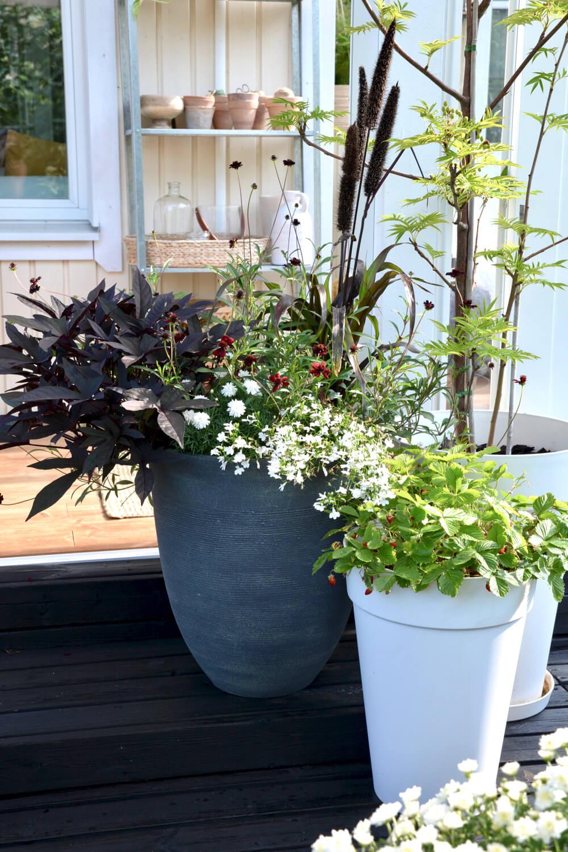 ruukkupuutarha-erilaisia-kasveja