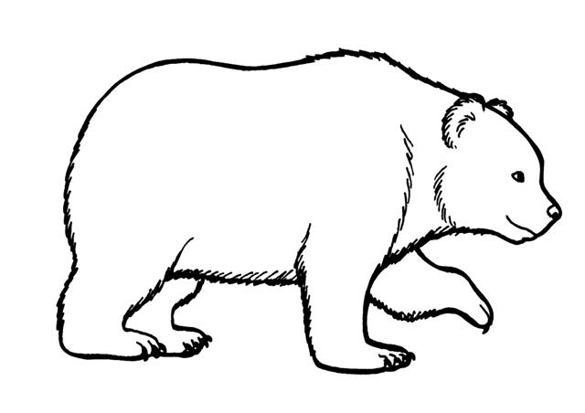 Dibujos De Osos Polares Para Colorear Osos Para Colorear