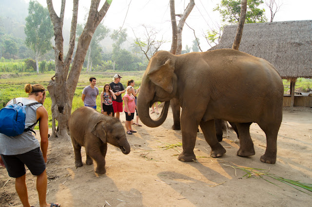 Thailand's-elephants-bid-a-fond-farewell-the-carniva