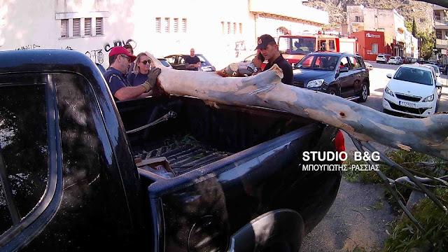 Δέντρο έπεσε πάνω σε αυτοκίνητο στο Νάυπλιο