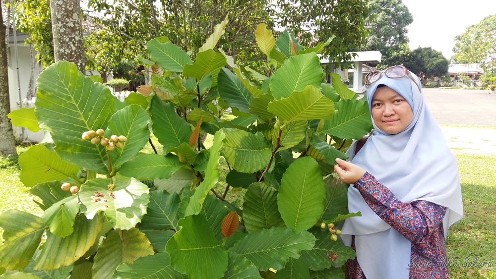 Tempat Menarik Yang Wajib Dikunjungi Di Pulau Belitung ...