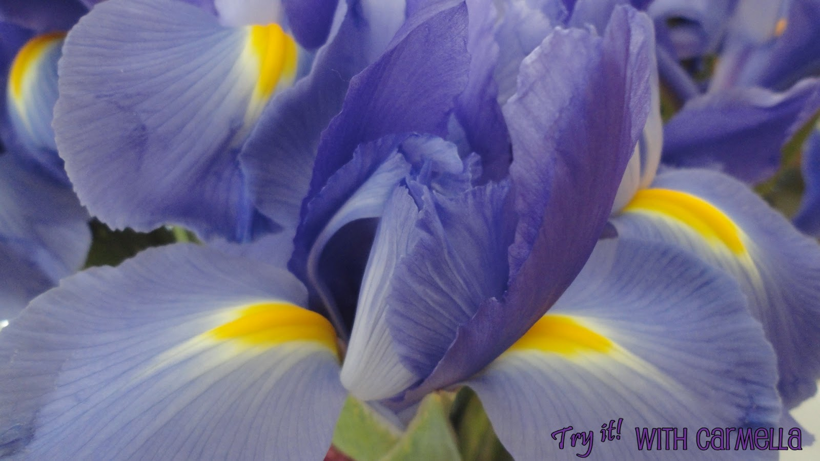 Try It With Carmella Purple and Yellow Flowers