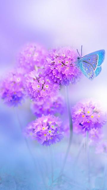 Linda Borboleta Azul, Flores Roxas, Violetas, hd, 4k.