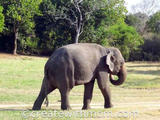 minneriya elephant sri lanka