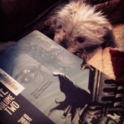 Murchie pokes his head out of a blanket cave to sniff a hardcover copy of Batman: Earth One Volume Two. The cover features Batman in silhouette on a rooftop, with the hazy image of four other characters' eyes floating in the sky above him.
