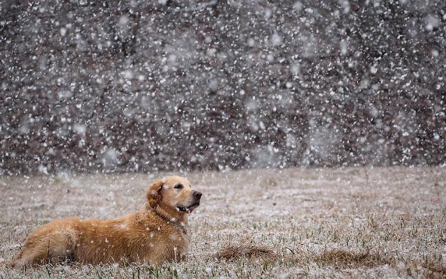 Hond in de sneeuw tijdens de winter.