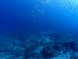 2021年9月11日の柏島ダイビング