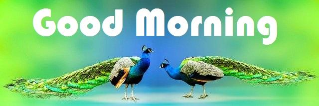 Good Morning Peacock image