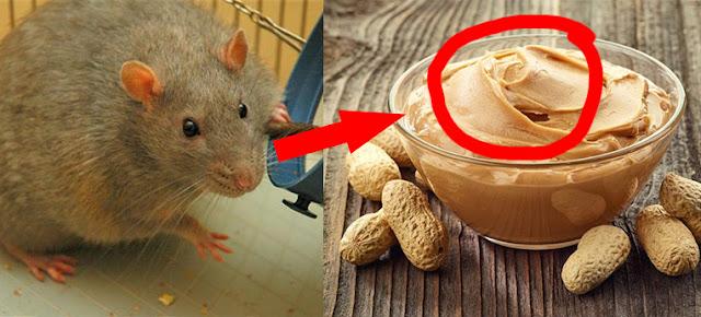 مواد تضعها منظمات الصحة العالمية في طعامنا! نأكل حشرات؟