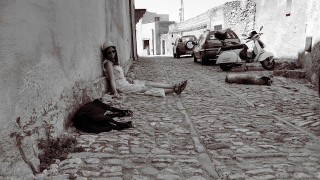Bezdomny pies w Erice