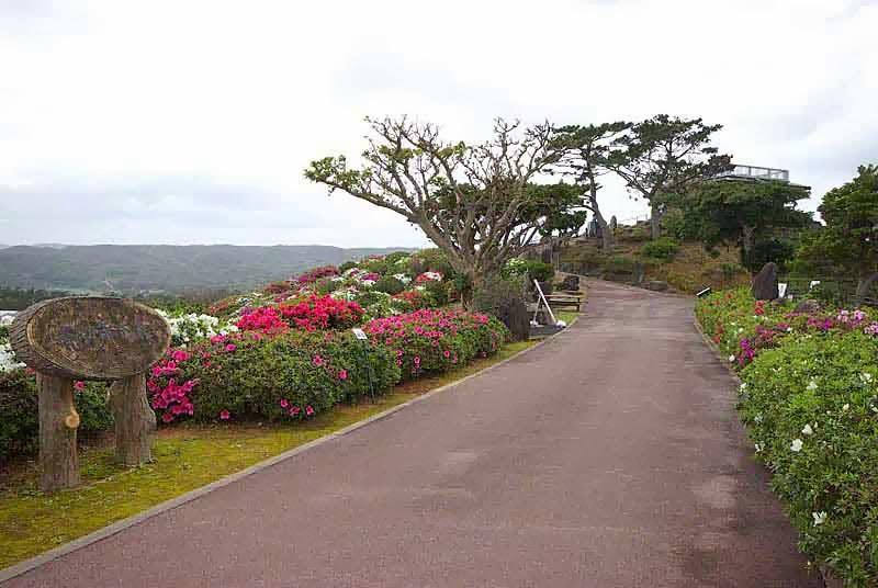 flowers overlooking ocean,Azalea