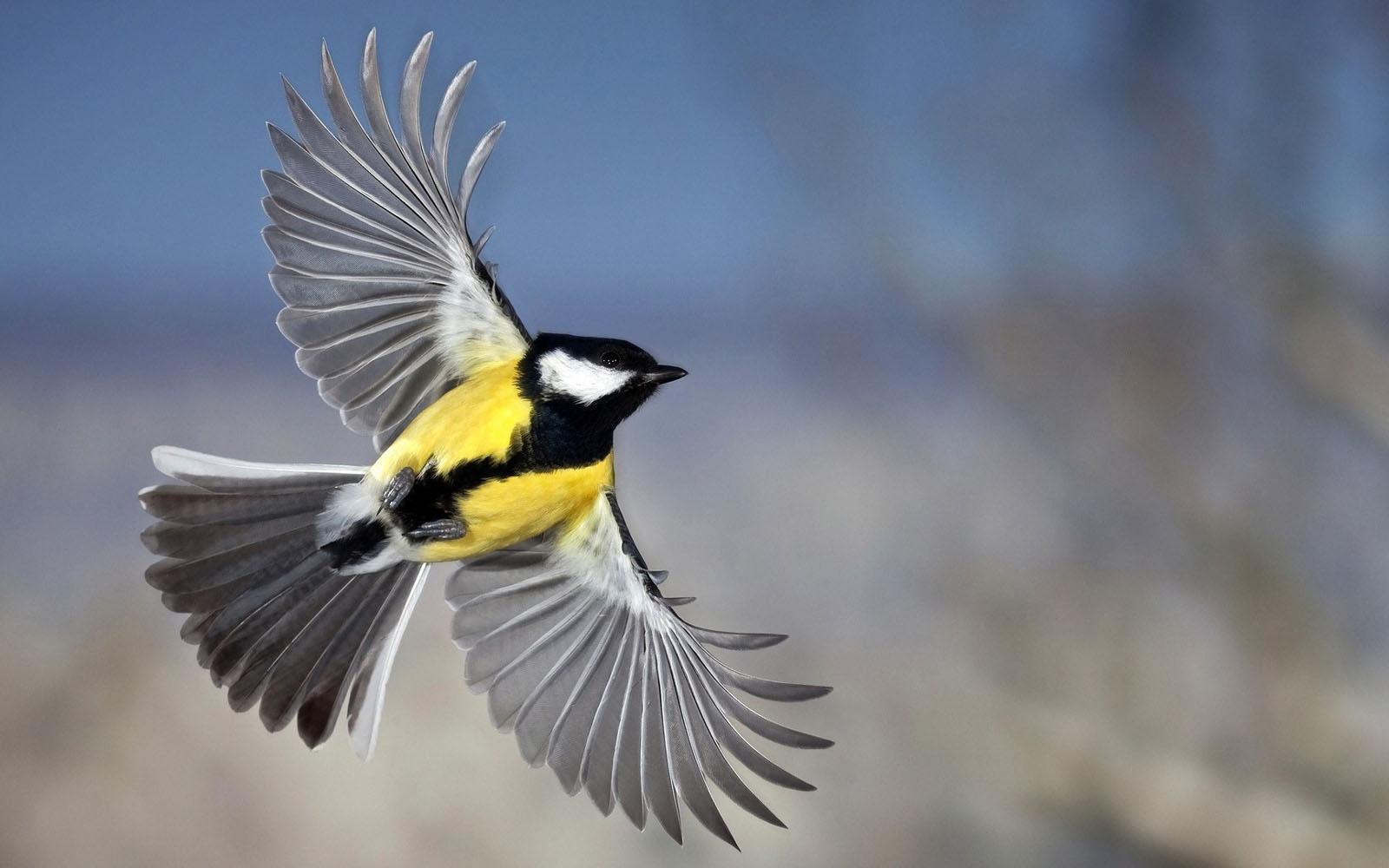 wallpapers: Birds Wallpapers for Desktop