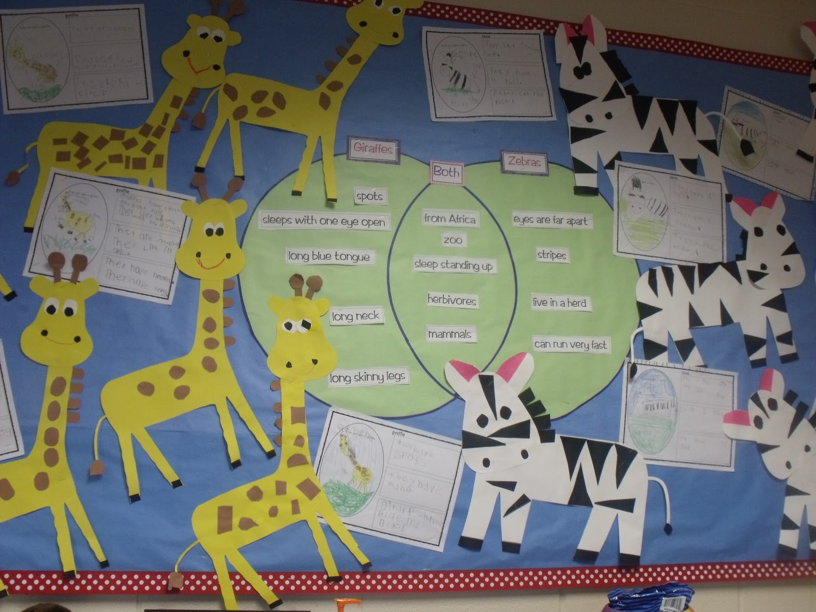 Venn Diagram Bulletin Board 2002 Dodge Ram 1500 Parts Zoo Unit Zebras Mrs Jump 39s Class