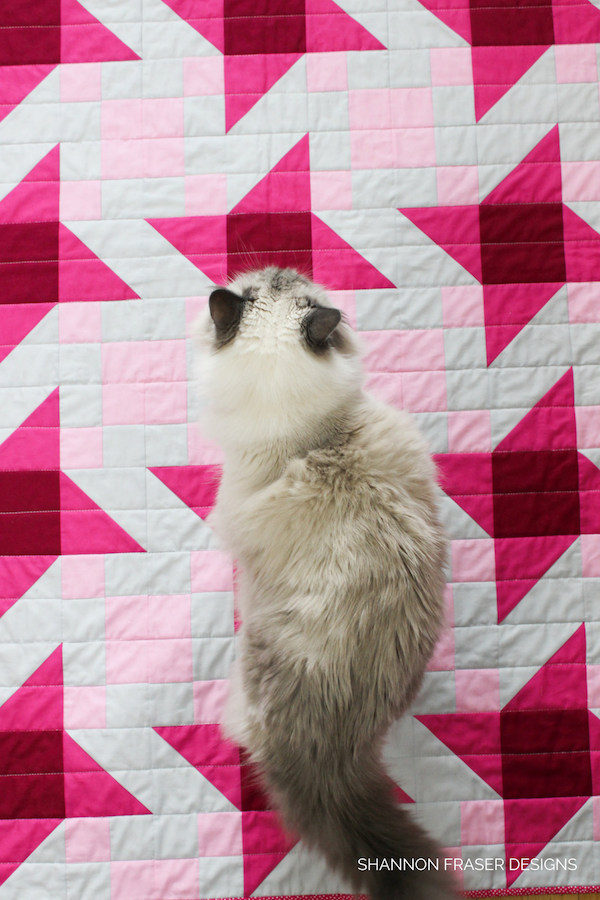 Pips on Irish Vortex Quilt | Cats on quilts | Shannon Fraser Designs