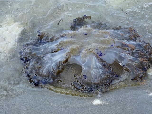 Chorwacja meduzy - co to jest?