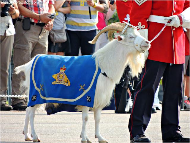 La Cabra Batisse de la Ciudadela de Quebec