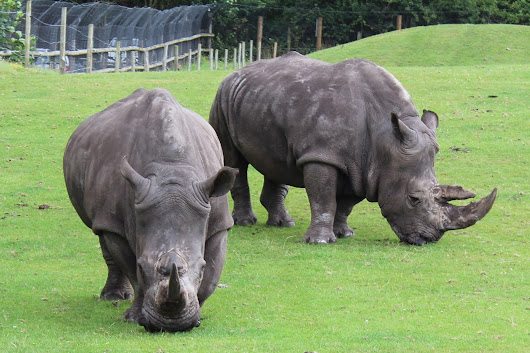 West Midlands Safari Park - Review