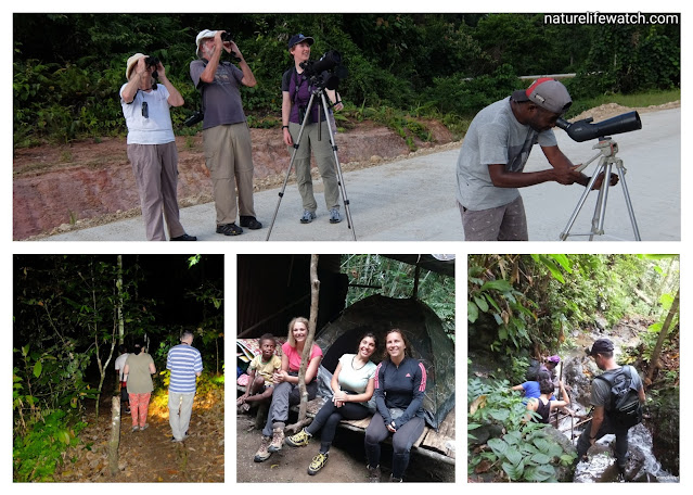 wisata hutan di Manokwari dan Sorong