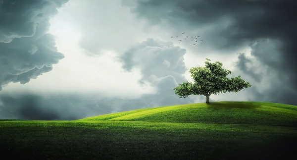 Mengenal Pohon Thuba, Pohon Paling Besar di Surga