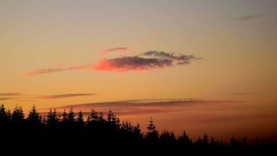 Tree Silhouette Sunset Full HD Wallpaper