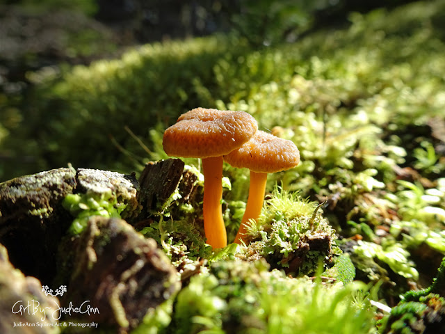 Happy Little Mushrooms Young Winter Chanterelles 4 Photos