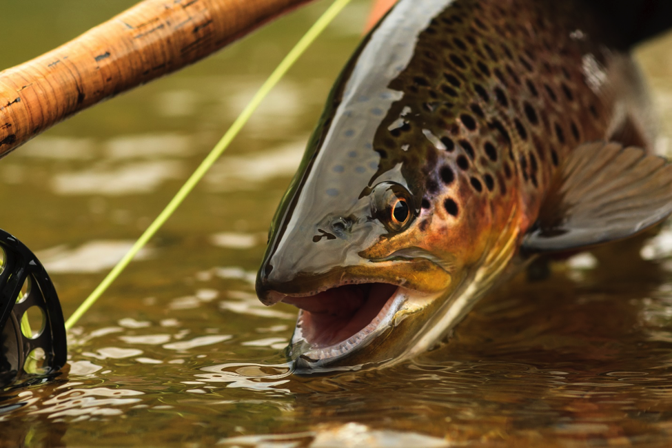 Fly fishing travel destination spots for Fly fishing spots near me