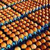Δεν υπάρχει ανησυχία για μολυσμένα αβγά στη χώρα