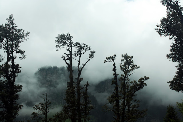 Misty, Clouds, Greenery, weather, Manali, Himachal