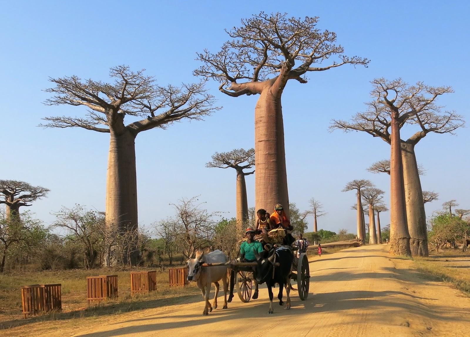 糊塗行: 馬達加斯加之旅 - Morondava