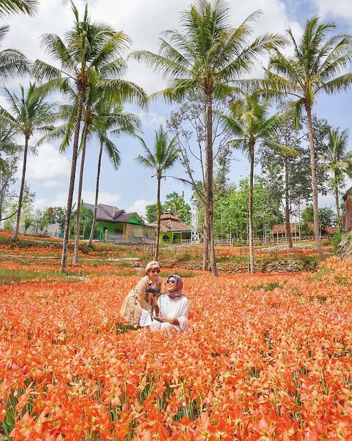 Taman Bunga Amarilis Gunungkidul