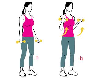 Travaillez vos biceps