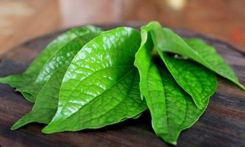 Manfaat daun sirih untuk hilangkan bau badan