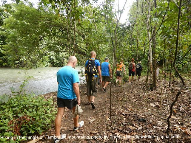 European tourists in rainforest of West Papua