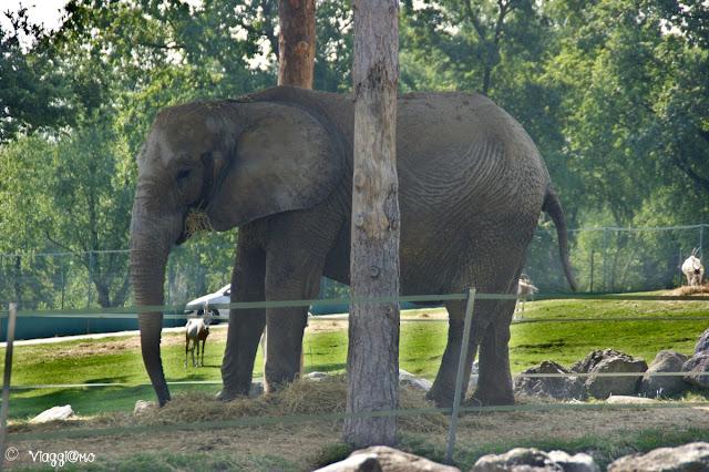 Uno dei pachidermi dello Zoo Safari