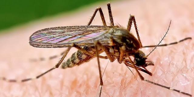 Ternyata Inilah Rahasia Supaya Rumah Anda Bebas Dari Nyamuk