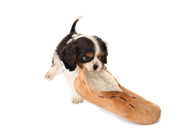 Dog' Life Chew