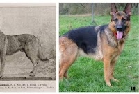 Find out what your dog looks like 100 years ago