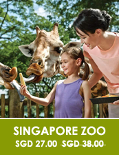Singapore Travel Blog Singapore Zoo Tour
